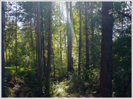 Этот сказочный лес
