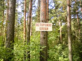 Приключения в сказочном лесу