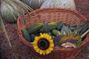 Огурчики позолоченные осенью