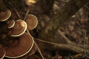 Не съедобные, но грибы!