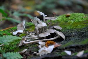 смерть грибов)