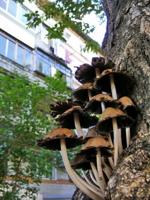 городские грибы