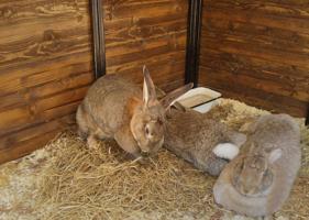Кролики - не только  ценный мех