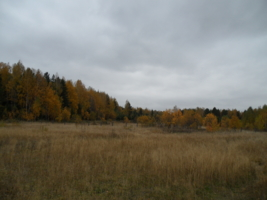 Осенняя пора ♡