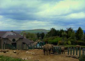 Слоны  Белфаста