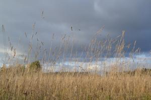Над осенним полем
