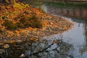 Обмелевший пруд