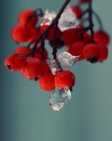 Лаконичность льда и ягод