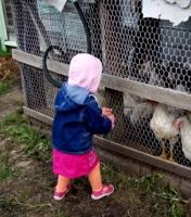 Надо покормить курочек