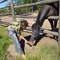 Любительница  лошадей