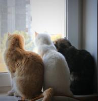 Три девицы у окна...