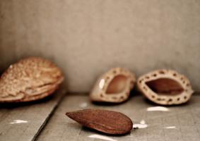 life of nut