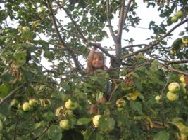 чем не яблочко?