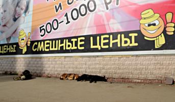 выставка-продажа собак