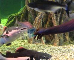 Взяточники в аквариуме