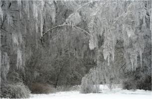 Зимние кружева...