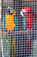 Свободу попугаям!