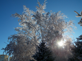 Чем пахнет зима?Чудом!