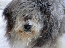 Холод собачий