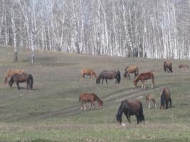 Мои любимые лошади