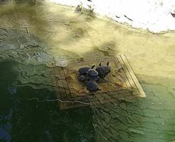 Семья черепах