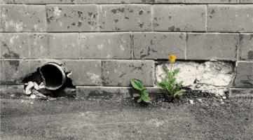 городская весна