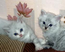 Синеглазики-близняшки