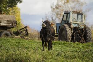 Сельский мотив
