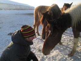 лошади тоже могут спорить!
