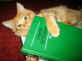 Мой начитанный котик...