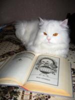 У кота масленица