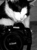 FotoKot