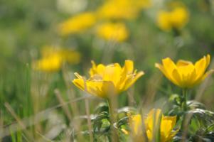 Солнечный цветок