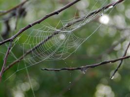 Лесные сети
