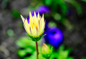 Одинокий цветок