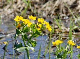Красавица на болоте
