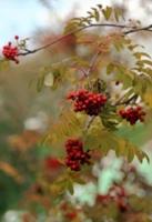 Осень пробует перо.....
