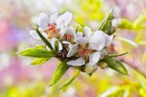 Акварель весны