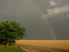 После дождя в полях