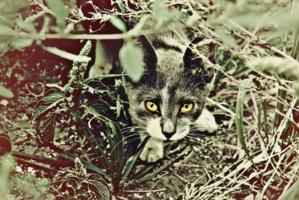 Кошачьи джунгли