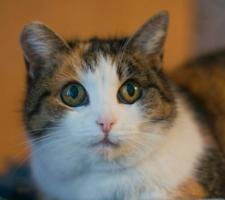 Мир в кошачьих глазах