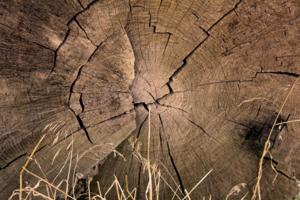 Структура дерева