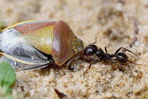 Из жизни насекомых