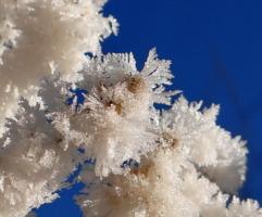 Цветы для Снежной Королевы