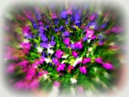 Цветочный триколор