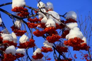 Украшение нашей долгой зимы