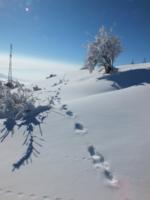 прошёл снежный человек