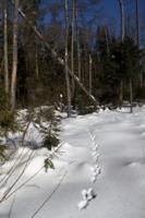 У леса на опушке.