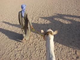Затоптанная пустыня