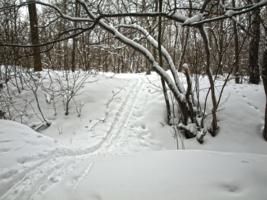 По свежему снегу.